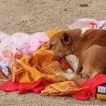 5 दिन तकश्मशान घाट पर मृतक मालकिन के लौटने का इंतजार करता रहा वफादार कुत्ता